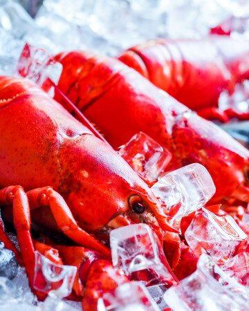 lobster news