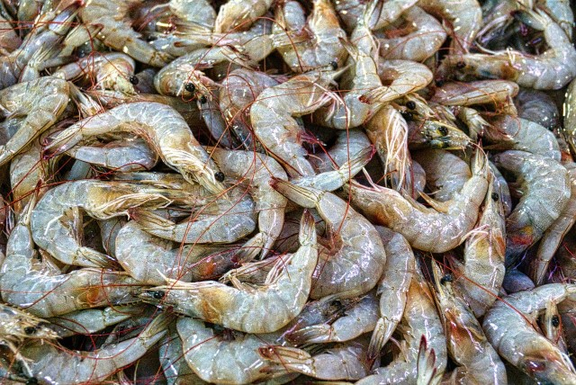 seafood safety report
