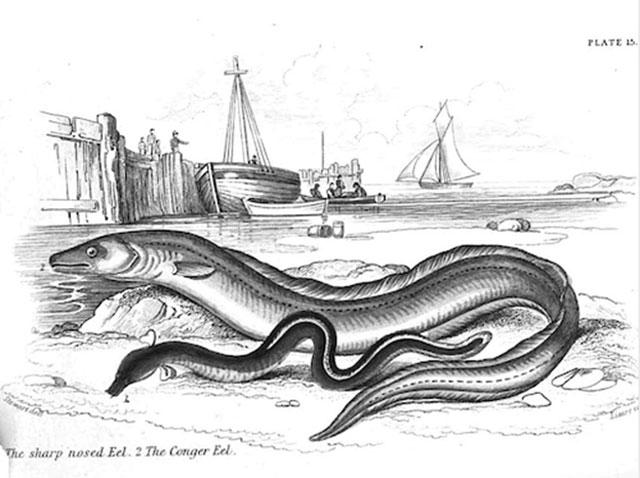 fishing for eels