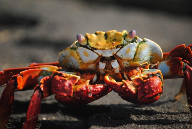 Crab Gumbo