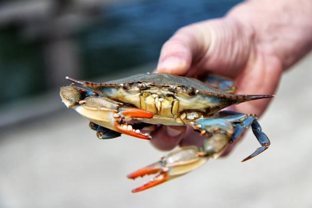 spicy crab recipe