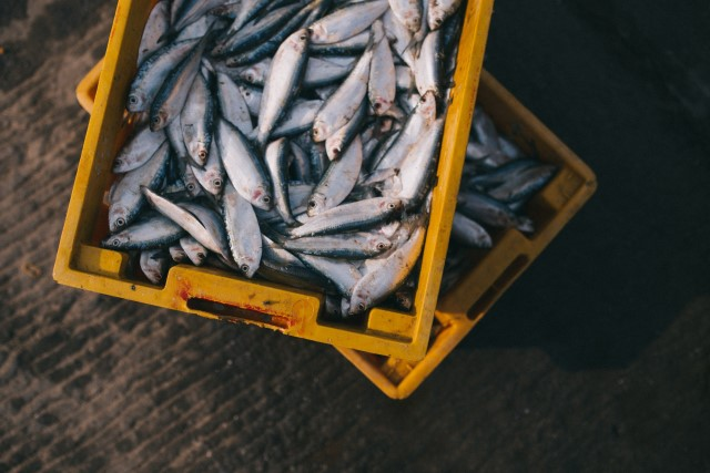 illegal fishing news